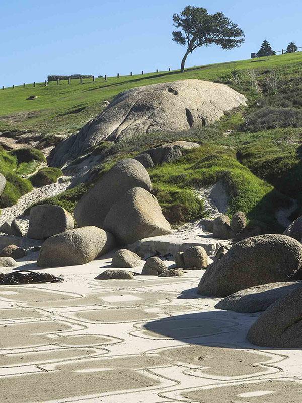 boulder tree bd