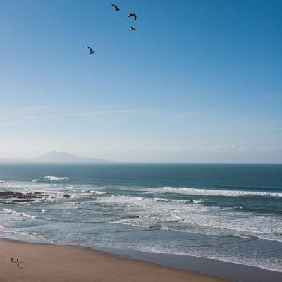 dougados, néologisme, biarritz, seagull