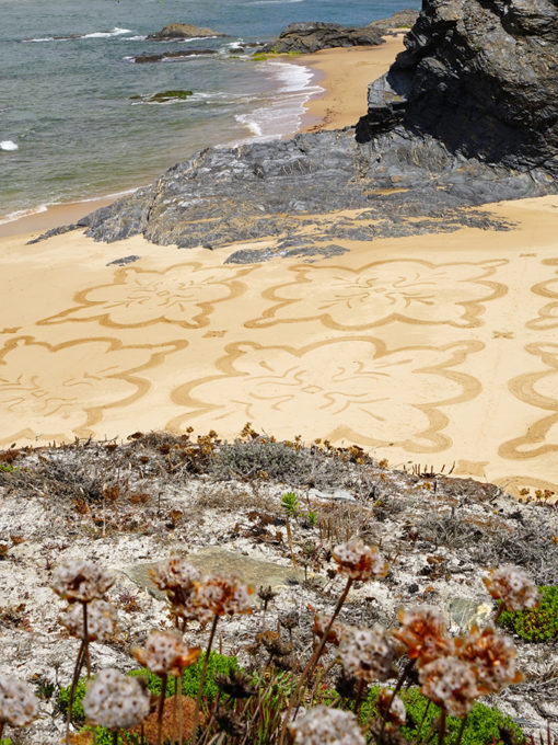 beach art, portugal, sam dougados, villa nova, flower, cliff